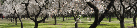 almendros_en_flor_eventosconcorazon_senderismo_excursion_viaje_vacaciones_madrid_barra_decorativa